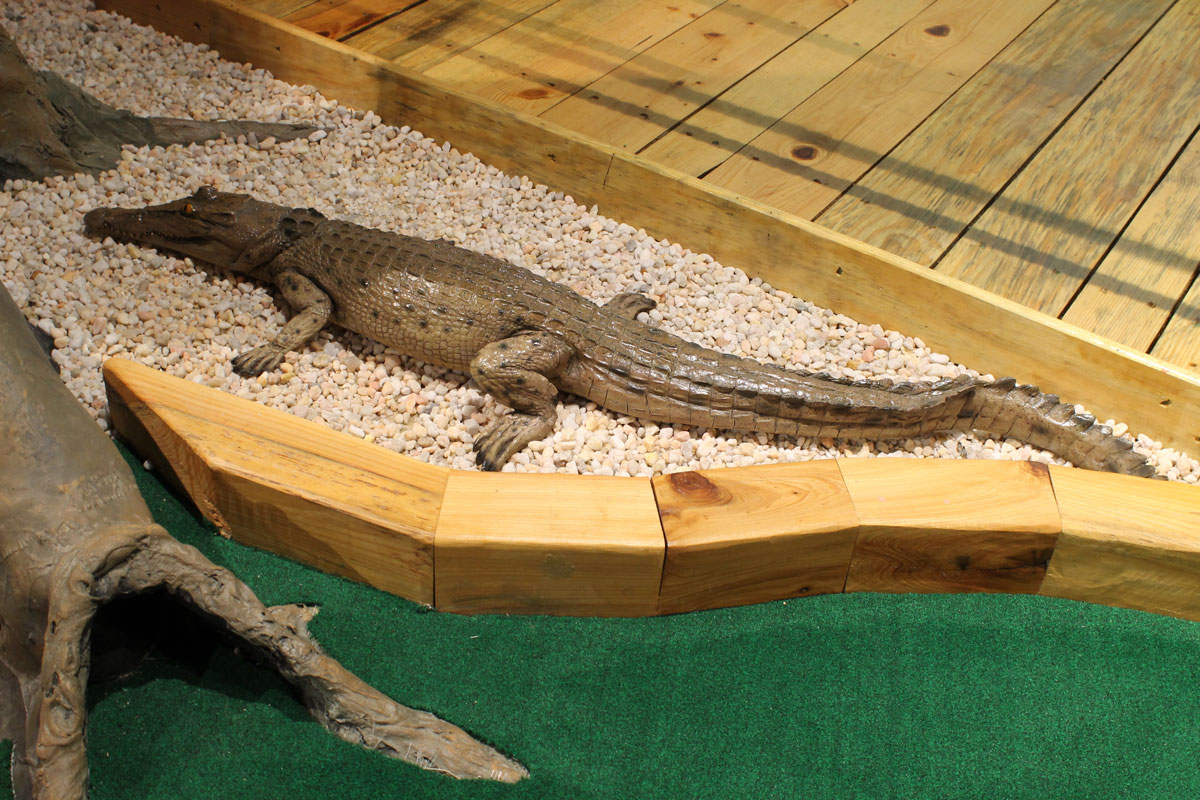 captain-jacks-mini-golf-alligator2-interior